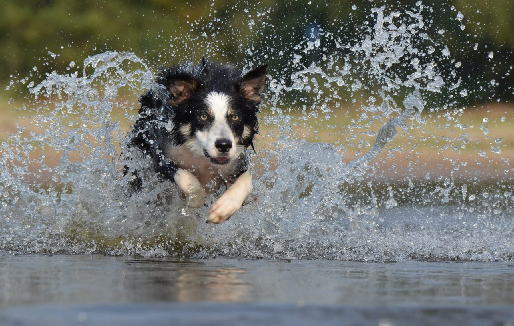 Read more about the article Top Tips for Keeping your Pet Cool in Hot Weather