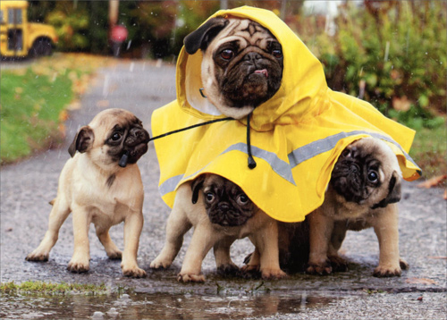 Read more about the article Wellies & Walkies……..