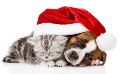 Christmas with our pets