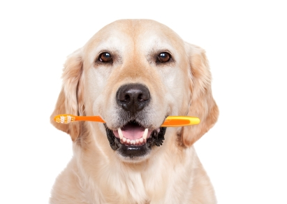 Taking care of your Pets Teeth needn't be hard work ……..