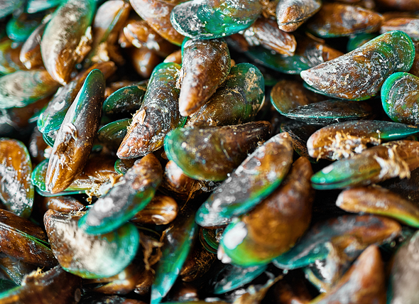 Green Lipped Mussels to the rescue …..