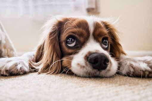 Reducing separation anxiety in dogs when lockdown is over