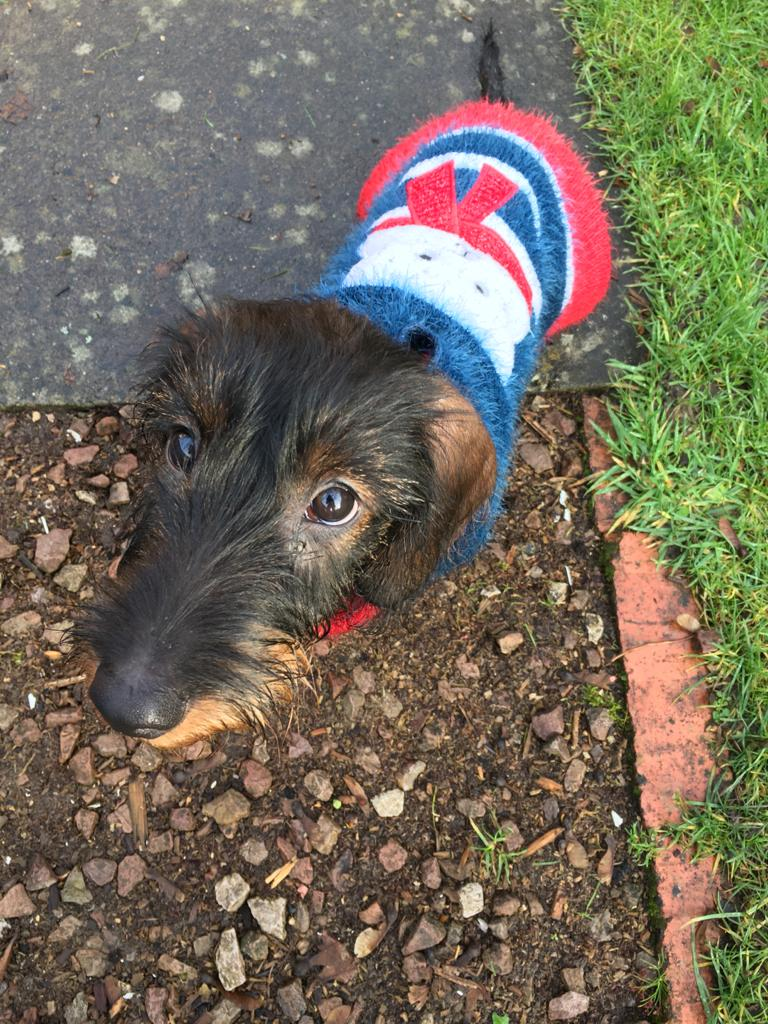 Read more about the article Your Puppy and his first few months……