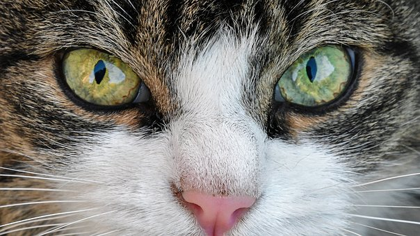 Read more about the article Why does my cat ………… ?