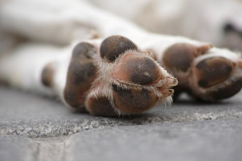 Read more about the article Protecting your dogs paws……..